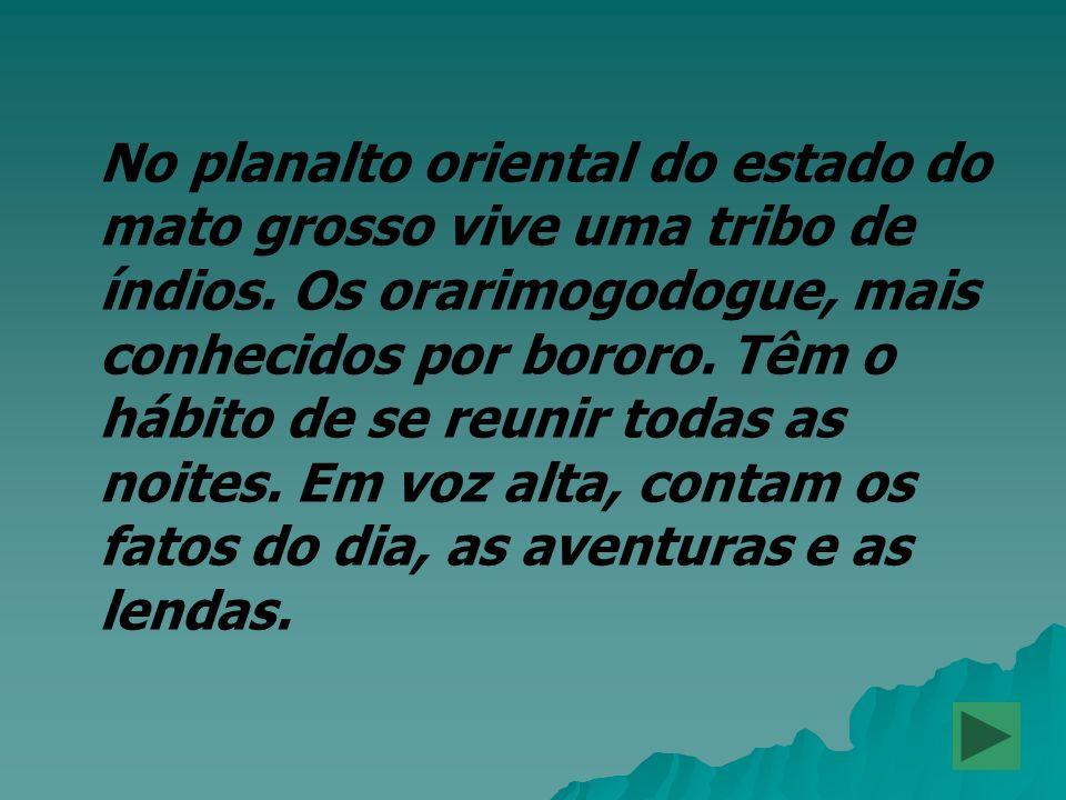 No planalto oriental do estado do mato grosso vive uma tribo de índios. Os orarimogodogue, mais conhecidos por bororo. Têm o hábito de se reunir todas