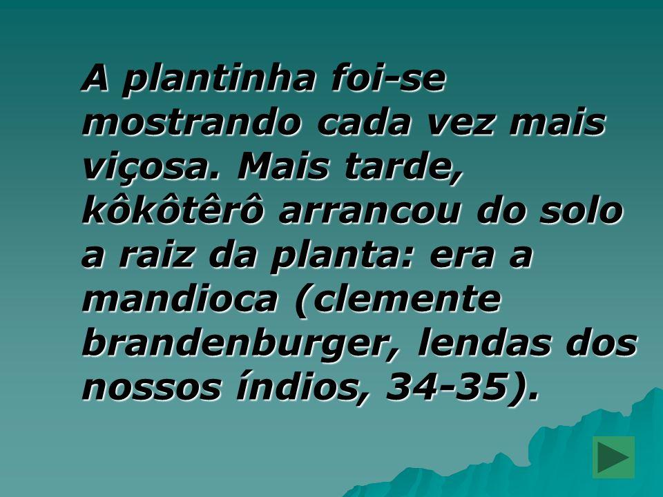 A plantinha foi-se mostrando cada vez mais viçosa. Mais tarde, kôkôtêrô arrancou do solo a raiz da planta: era a mandioca (clemente brandenburger, len