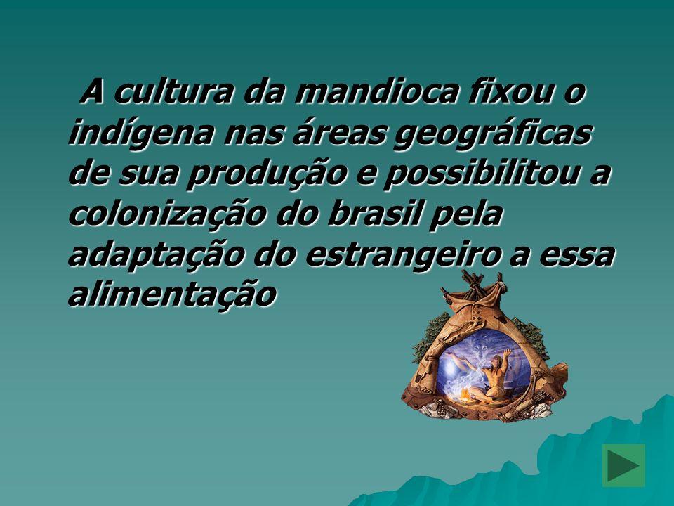 A cultura da mandioca fixou o indígena nas áreas geográficas de sua produção e possibilitou a colonização do brasil pela adaptação do estrangeiro a es