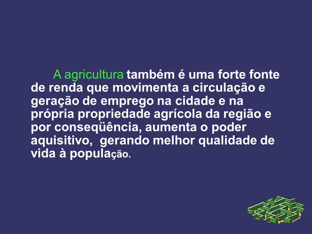 A agricultura também é uma forte fonte de renda que movimenta a circulação e geração de emprego na cidade e na própria propriedade agrícola da região
