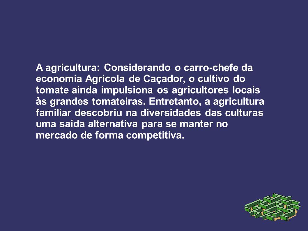 A agricultura: Considerando o carro-chefe da economia Agricola de Caçador, o cultivo do tomate ainda impulsiona os agricultores locais às grandes toma