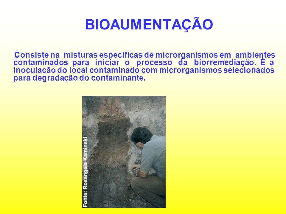 FITORREMEDIAÇÃO Processo em que se emprega plantas para descontaminar solos e água.
