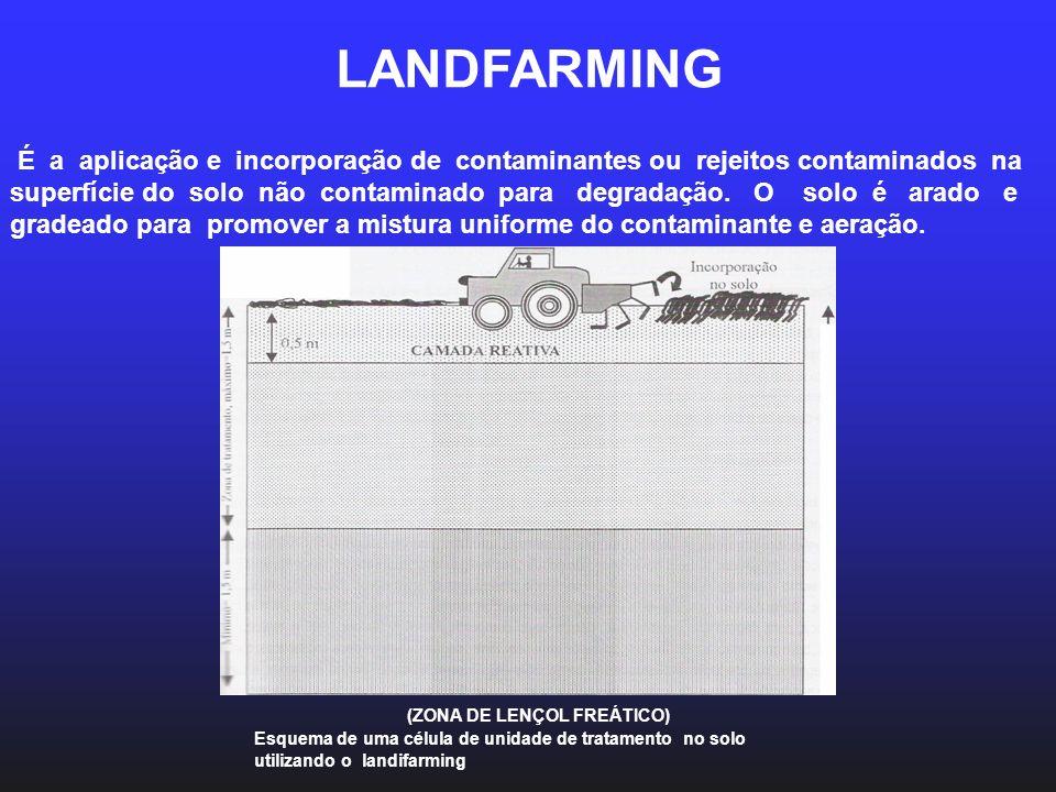 MACANISMOS DA FITORREMEDIAÇÃO Fitoestabilização- os contaminantes orgânicos ou inorgânicos são incorporados à lignina da parede vegetal.