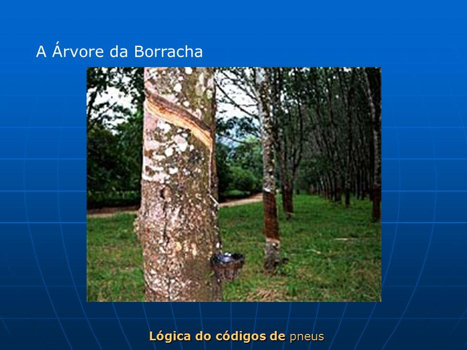 Lógica do códigos de pneus A Árvore da Borracha