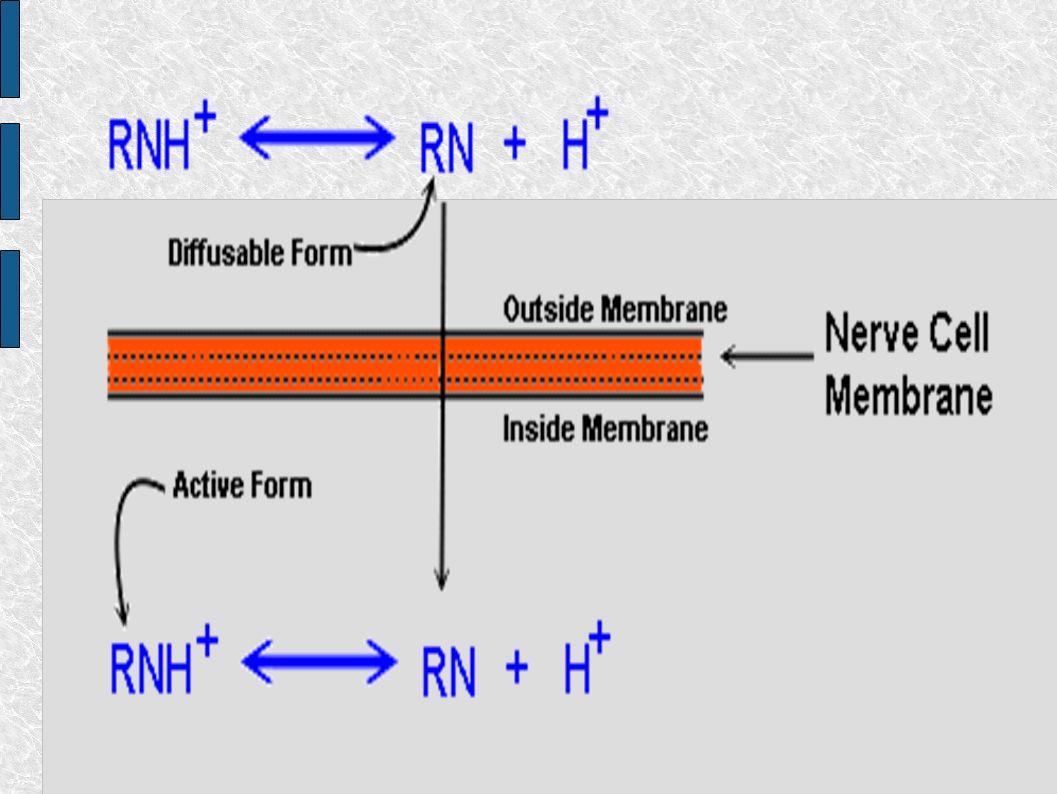 pH fidiológico 7.4 Uma vez que o anestésico atravessa a membrana, o que importa é a sua forma ativa RNH + Situação complicada: as anestesias que mais demoram para surtir efeito são as de efeito mais prolongado.