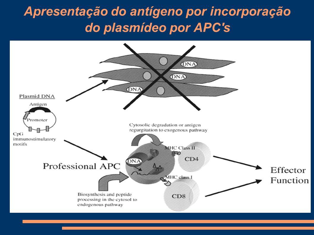 Apresentação do antígeno por incorporação do plasmídeo por APC's