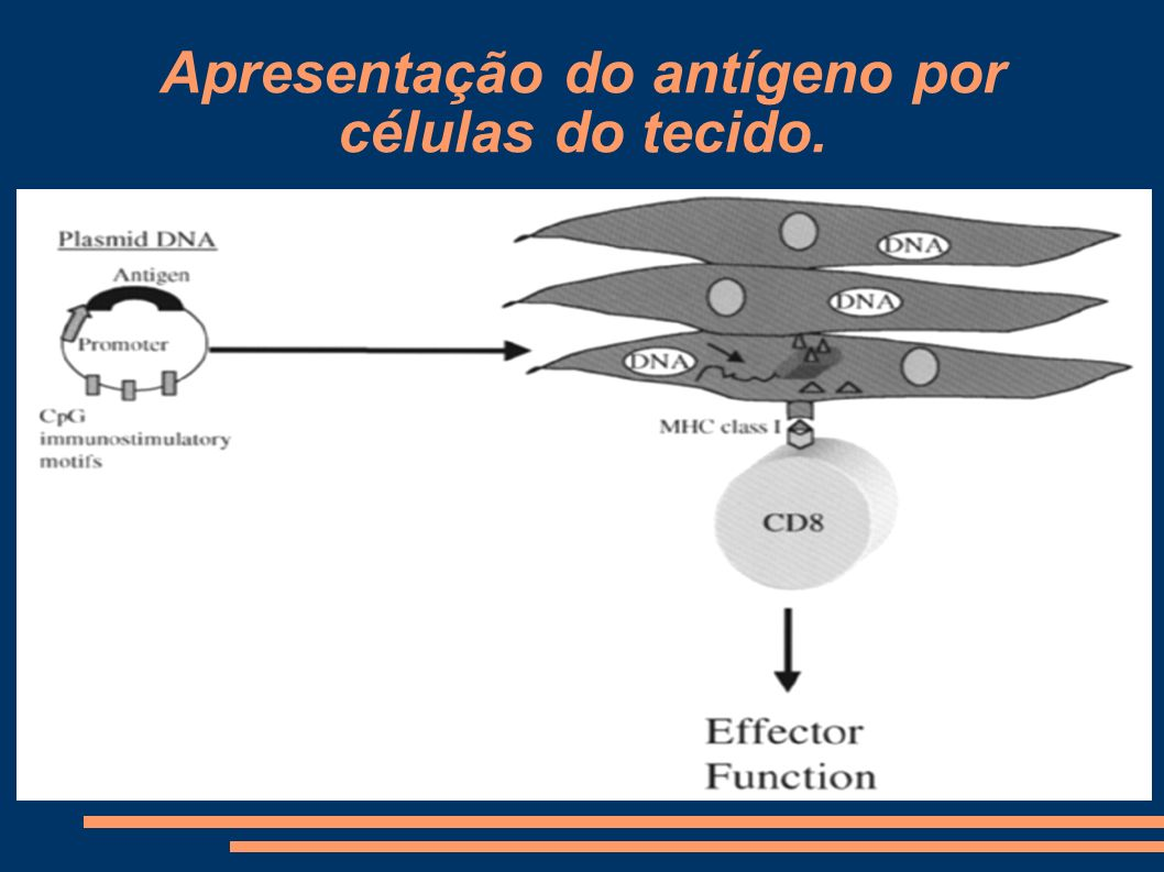 Apresentação do antígeno por células do tecido.