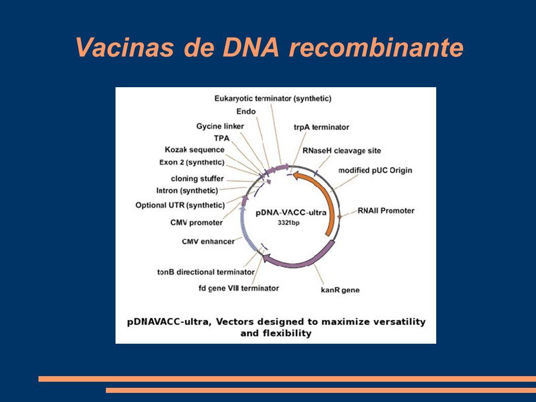 Vacinas de DNA recombinante