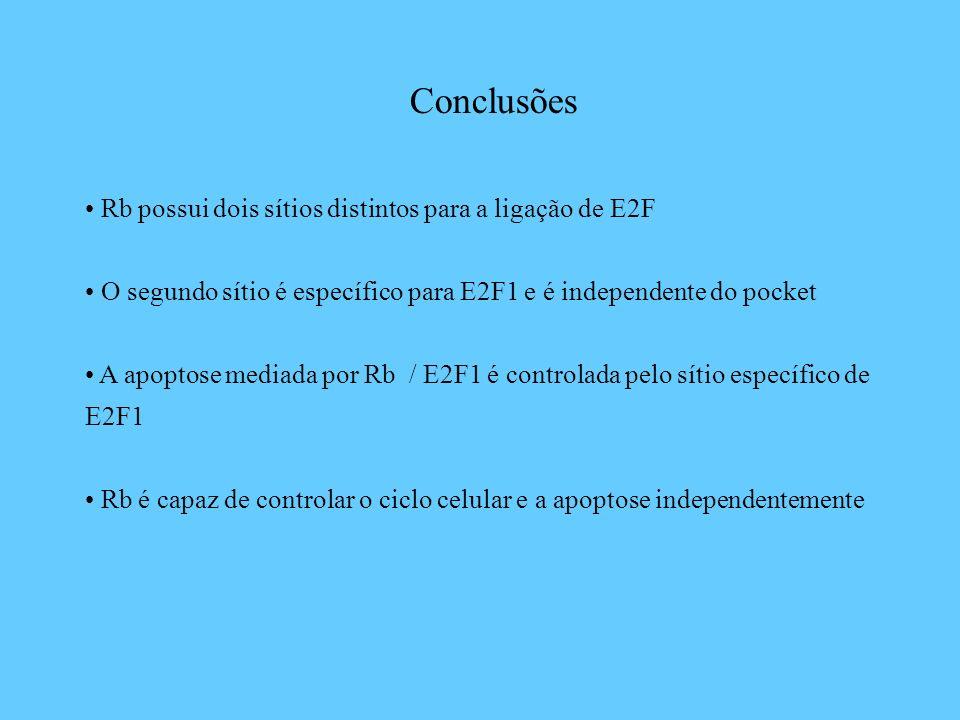 Conclusões Rb possui dois sítios distintos para a ligação de E2F O segundo sítio é específico para E2F1 e é independente do pocket A apoptose mediada