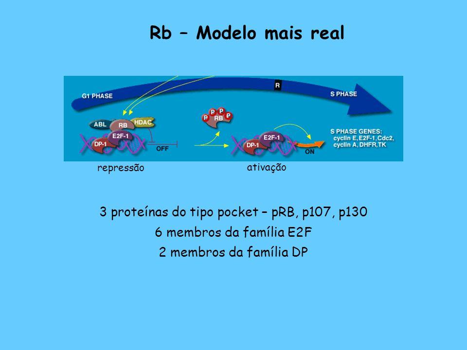 Rb – Ligação a E2F e domínio LXCXE Geração de Rb mutante