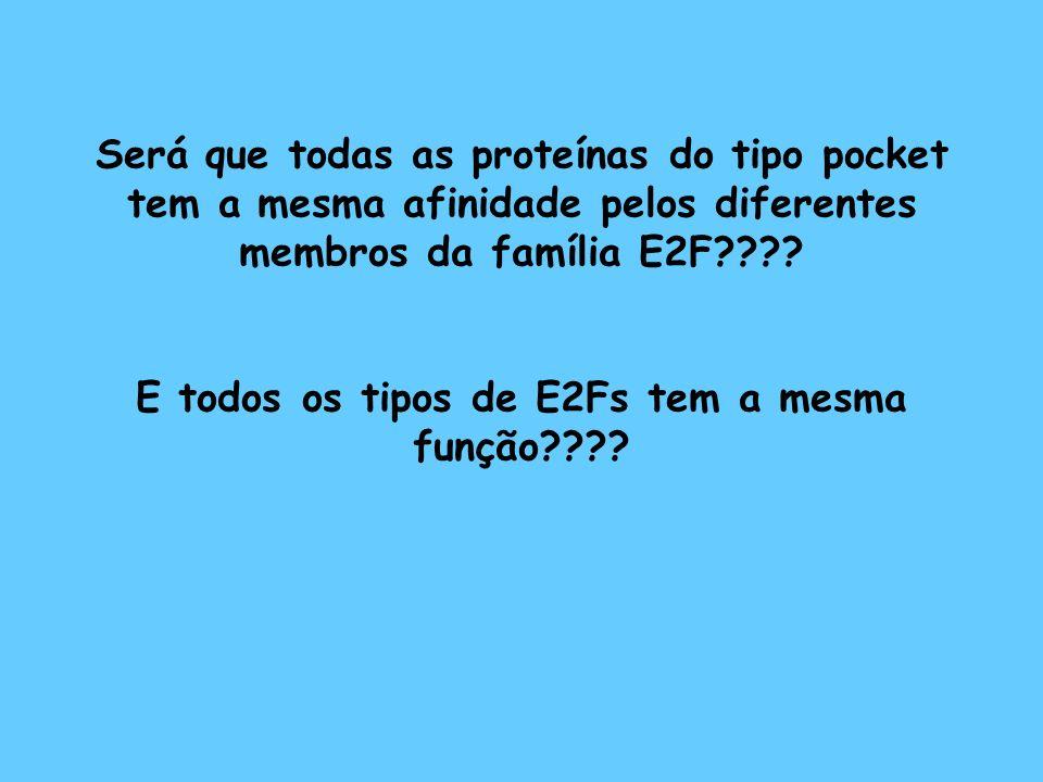 Será que todas as proteínas do tipo pocket tem a mesma afinidade pelos diferentes membros da família E2F???? E todos os tipos de E2Fs tem a mesma funç