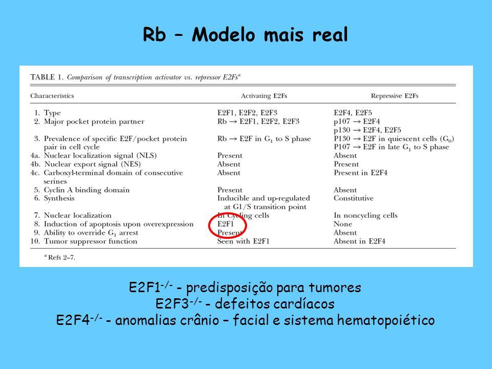 Rb – Modelo mais real E2F1 -/- - predisposição para tumores E2F3 -/- - defeitos cardíacos E2F4 -/- - anomalias crânio – facial e sistema hematopoiétic