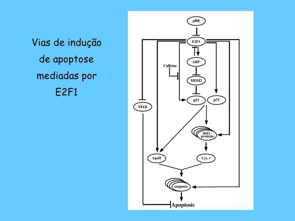 Caracterização da posição do segundo sítio