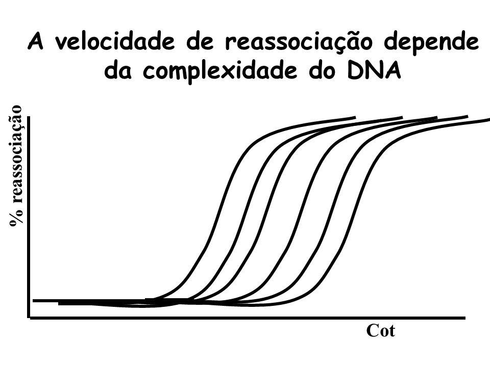 Reassociação depende da concentração das seqüências % reassociação Cot