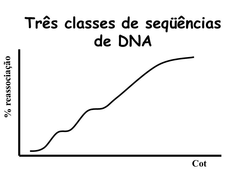 A velocidade de reassociação depende da complexidade do DNA % reassociação Cot
