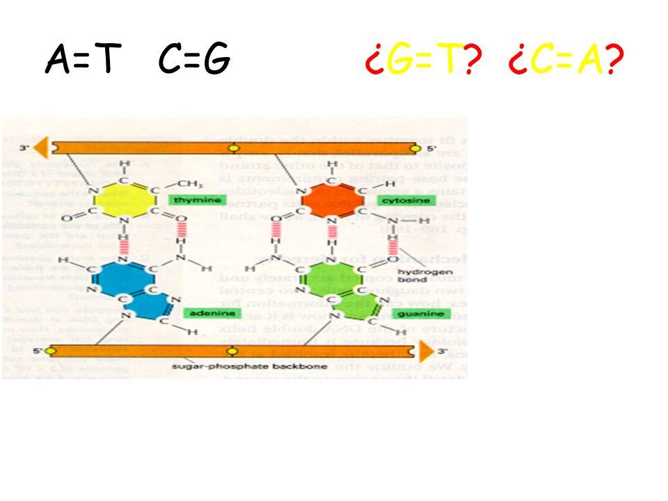 Ligação fosfodiester A reação de polimerização é feita pela DNA polimerase e necessita de nucleotídeos trifosfatos, uma extremidade primer ou iniciado