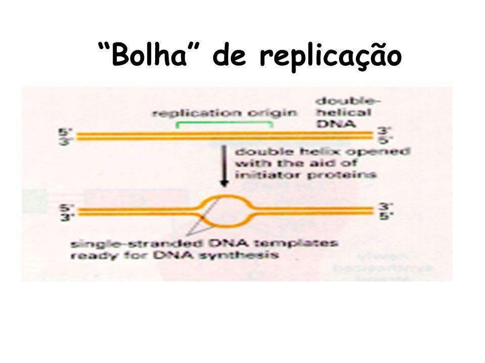 DNA polimerase I tem função editorial