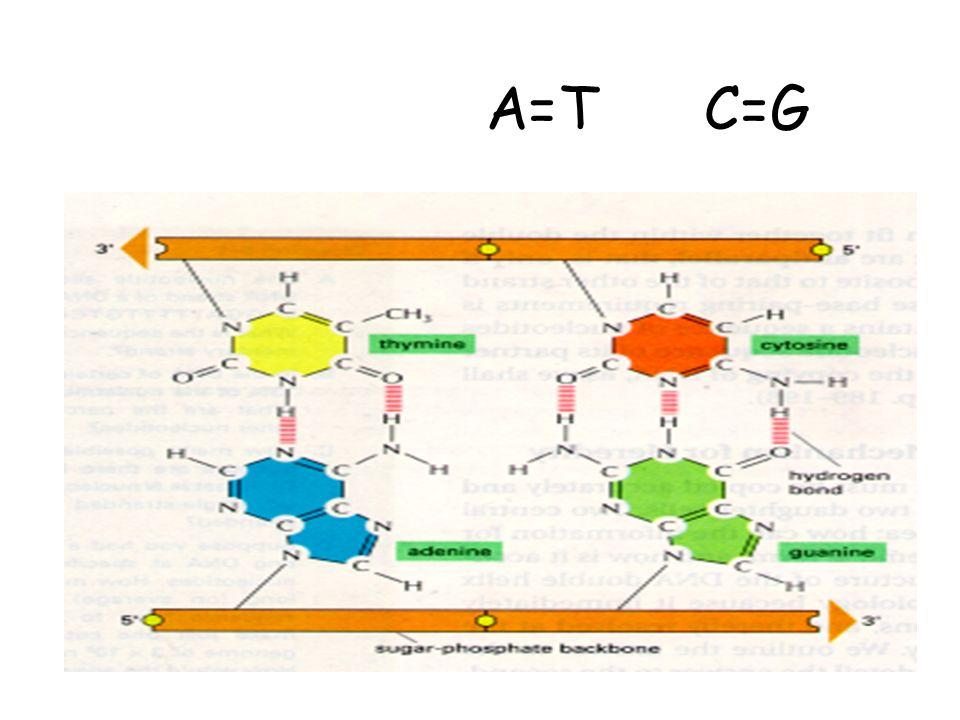 Três classes de seqüências de DNA Cot % reassociação