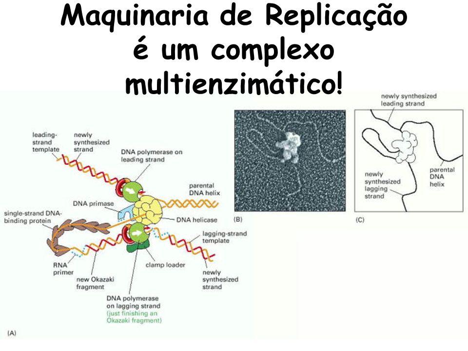 Replicação depende de diferentes atividades enzimáticas!