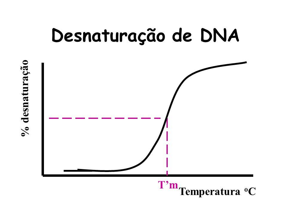 % desnaturação Temperatura o C Tm Desnaturação de DNA