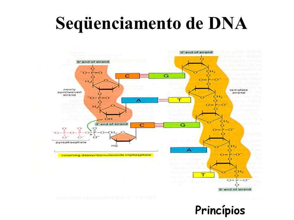 Organização da cromatina