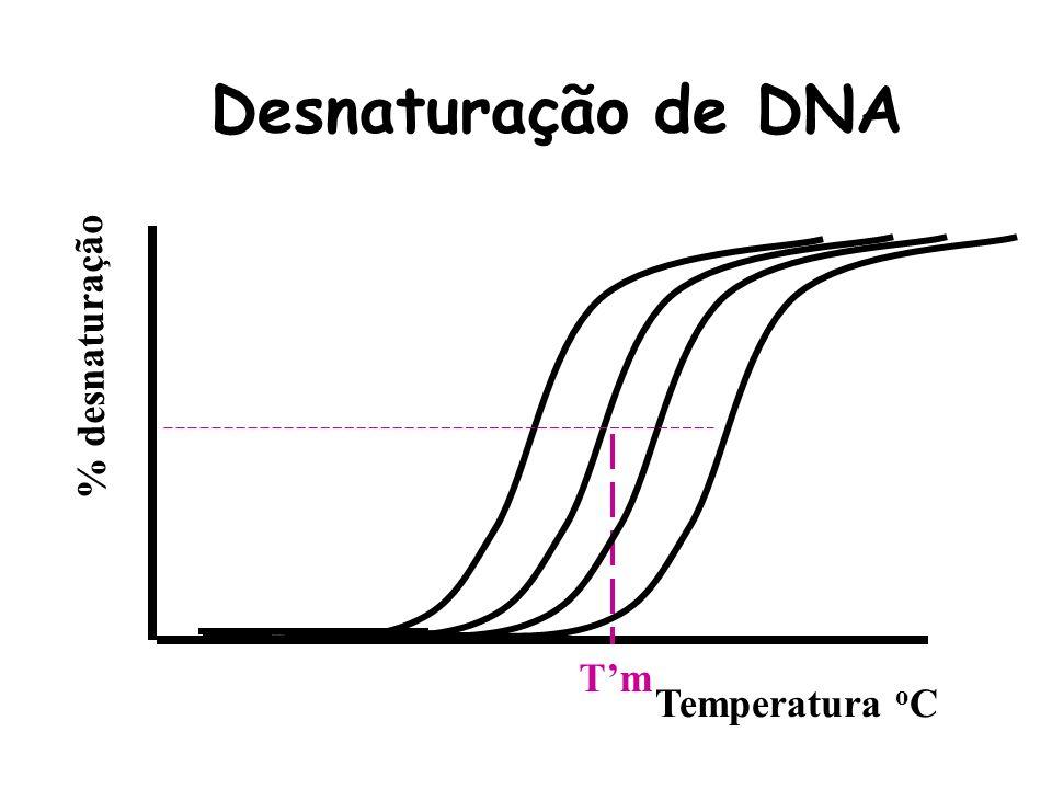 Replicação de DNA