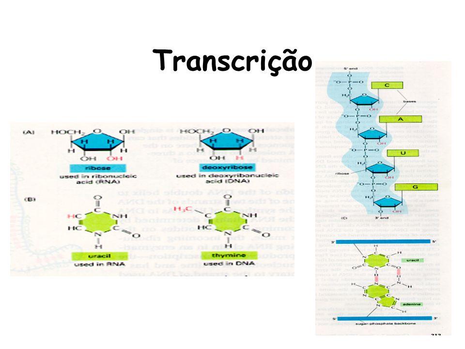 RNA polimerase é a enzima responsável pela transcrição
