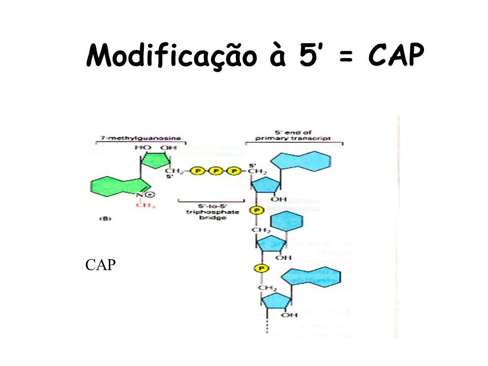 Modificação à 5 = CAP CAP
