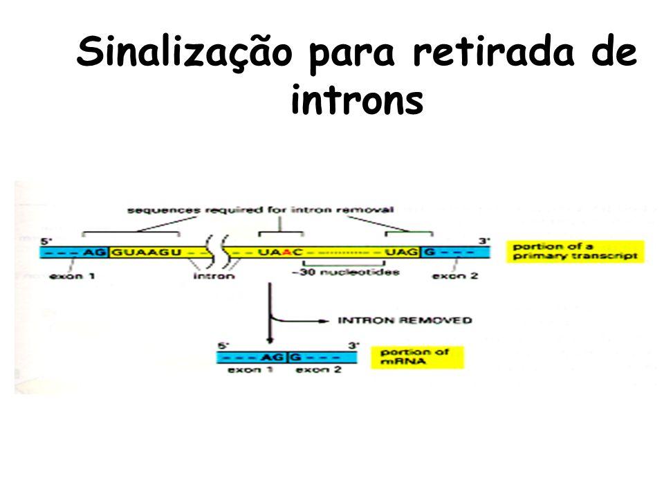 Sinalização para retirada de introns