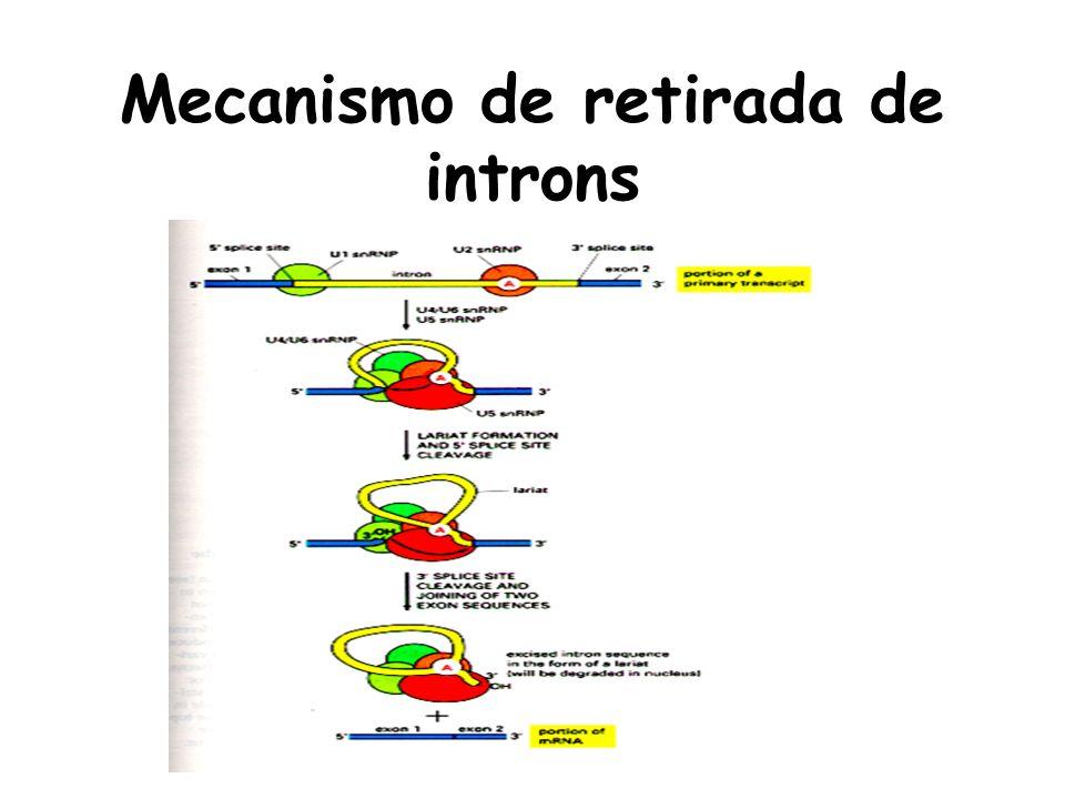 Mecanismo de retirada de introns