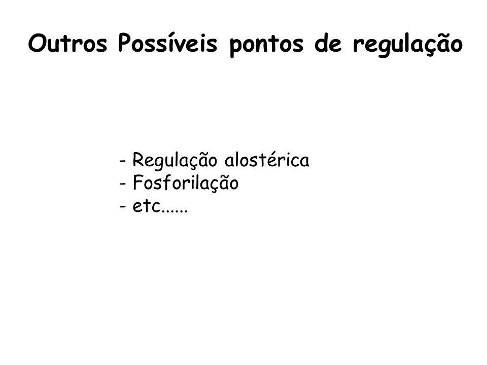 Outros Possíveis pontos de regulação - Regulação alostérica - Fosforilação - etc......