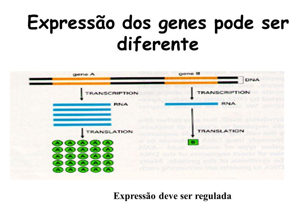Expressão dos genes pode ser diferente Expressão deve ser regulada