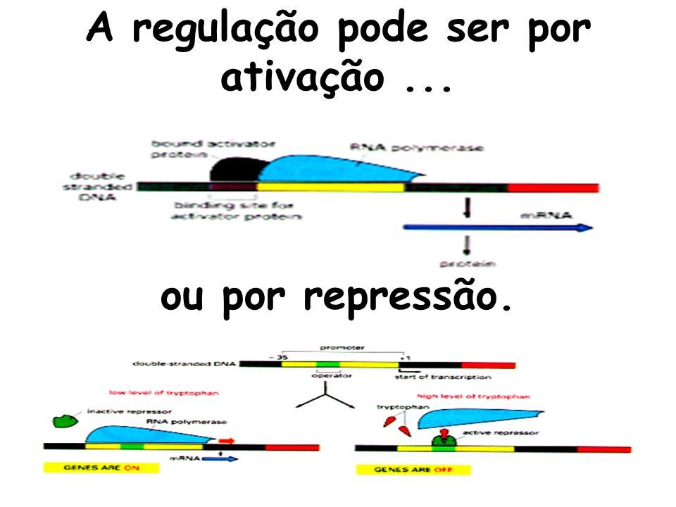 A regulação pode ser por ativação... ou por repressão.