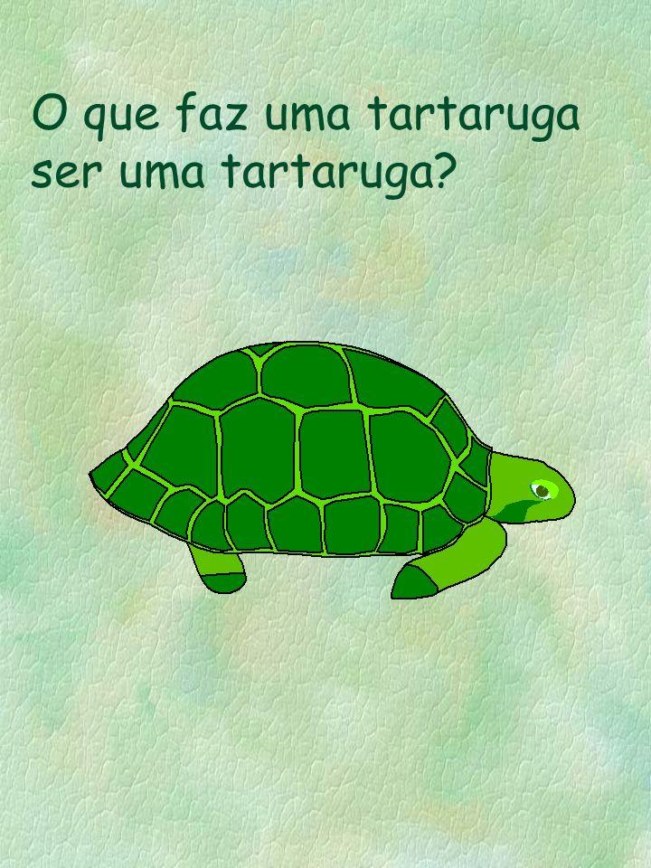 O que faz uma tartaruga ser uma tartaruga?