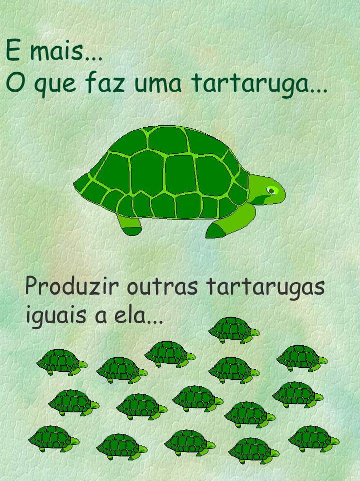 E mais... O que faz uma tartaruga... Produzir outras tartarugas iguais a ela...