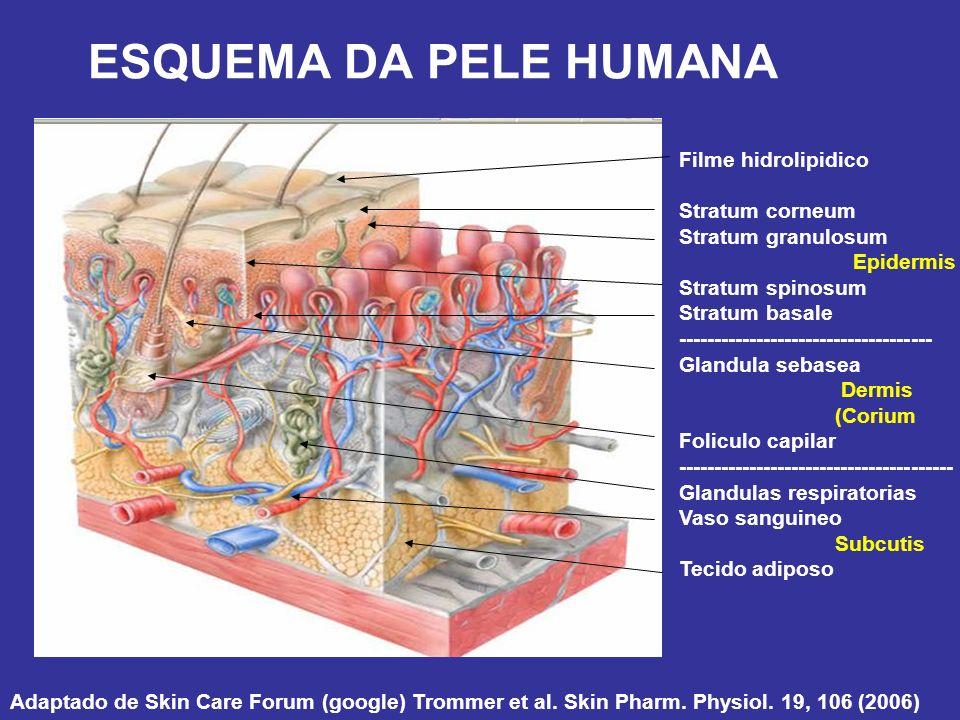 ESQUEMA DA PELE HUMANA Adaptado de Skin Care Forum (google) Trommer et al. Skin Pharm. Physiol. 19, 106 (2006) Filme hidrolipidico Stratum corneum Str