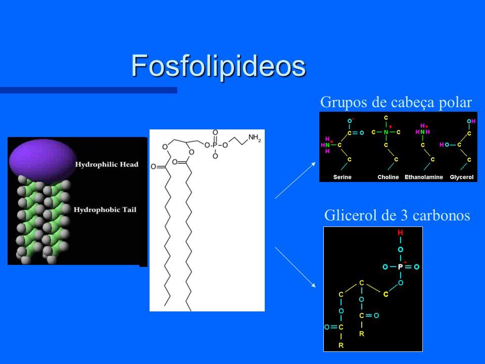 Que é um lipossoma? –Vesícula esféricar com uma bicamada fosfolipidica Hidrofilico Hidrofobico