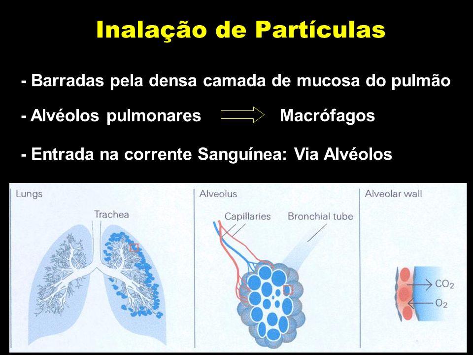 Inalação de Partículas - Barradas pela densa camada de mucosa do pulmão - Alvéolos pulmonares Macrófagos - Entrada na corrente Sanguínea: Via Alvéolos