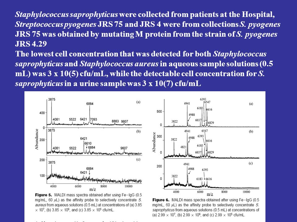 Staphylococcus saprophyticus were collected from patients at the Hospital, Streptococcus pyogenes JRS 75 and JRS 4 were from collections S. pyogenes J