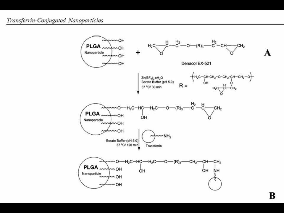 Formulação de NPs: NPs contendo Tx foi preparada pelo método de emulsão- evaporação.