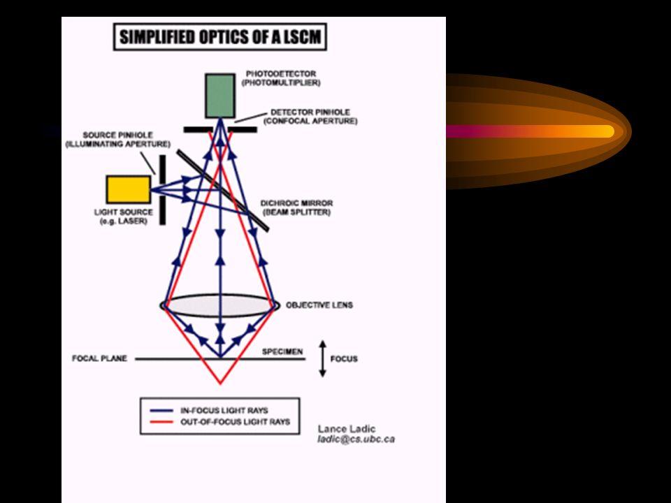 PCL/ microesferas de violaceina– Confocal Laser Scanning Microscopy (CLSM) Violaceina dispersa em matriz polimérica Barra = 10 m Durán e De Azevedo, 2005