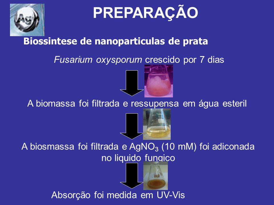 Durán et al., Journal of Nanobiotechnology, 1 (2005) 24 h Fusarium oxysporium em água Líquido Fungal antes da adição do Nitrato de Prata Líquido Fungal 24h após a adição do Nitrato de Prata Fusarium oxysporium