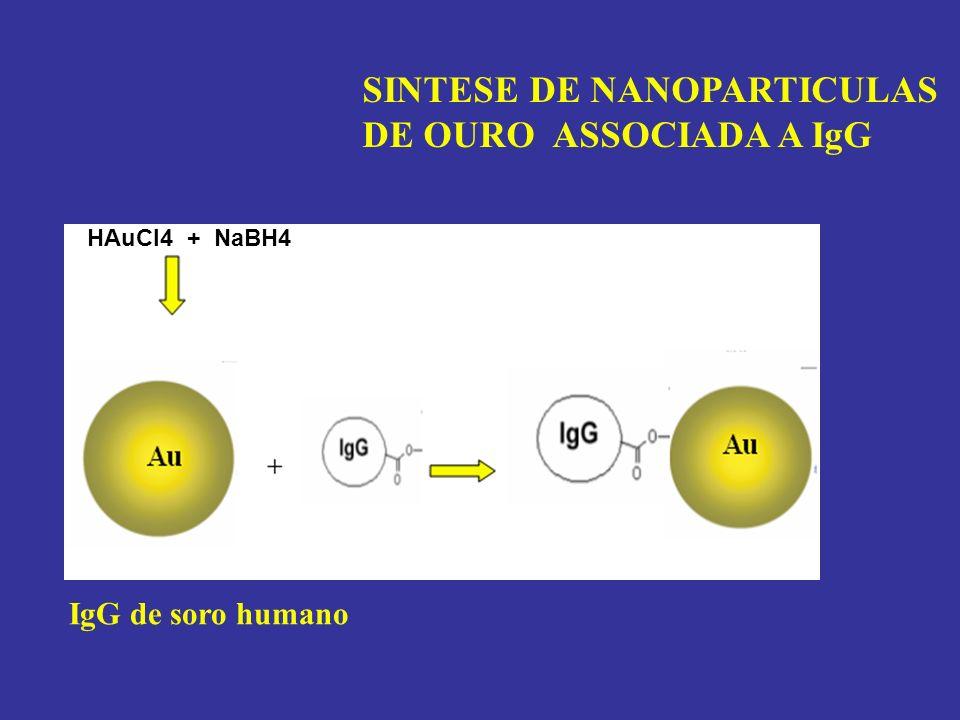 MAGNETITA CARREGADA COM BIOATIVOS BIOACTIVE Esta metodologia aplica tambem a nanoparticulas de ouro N.