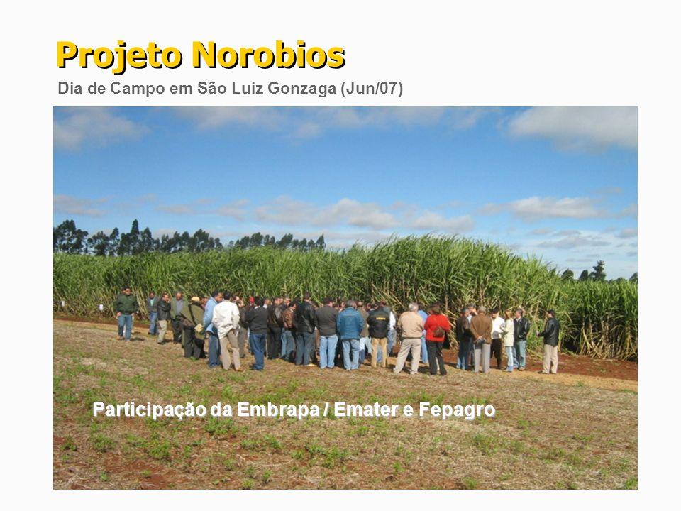 Participação da Embrapa / Emater e Fepagro Projeto Norobios Dia de Campo em São Luiz Gonzaga (Jun/07)