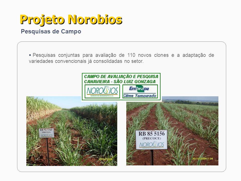 Pesquisas conjuntas para avaliação de 110 novos clones e a adaptação de variedades convencionais já consolidadas no setor. Projeto Norobios Pesquisas