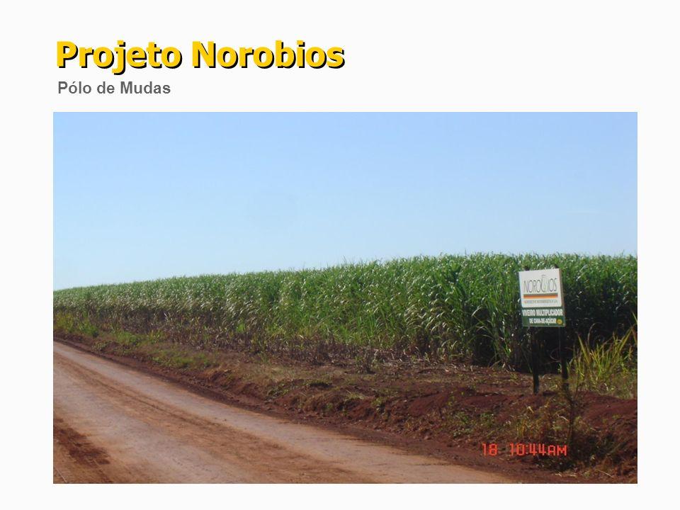 (*) Abastecimento do mercado estadual de etanol.