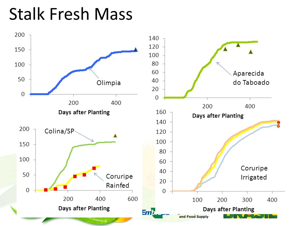 Stalk Fresh Mass Colina/SP Coruripe Rainfed Coruripe Irrigated Olimpia Aparecida do Taboado
