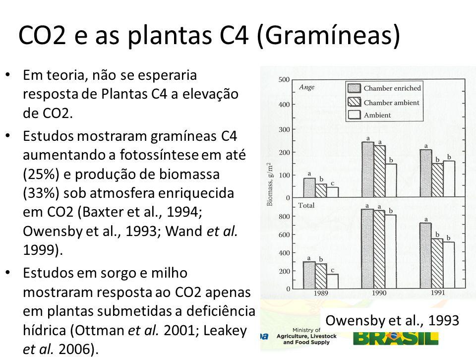 CO2 e as plantas C4 (Gramíneas) Em teoria, não se esperaria resposta de Plantas C4 a elevação de CO2.