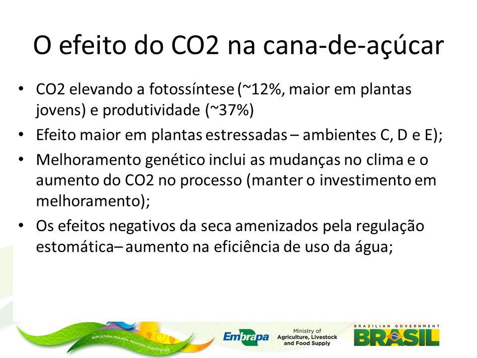 O efeito do CO2 na cana-de-açúcar CO2 elevando a fotossíntese (~12%, maior em plantas jovens) e produtividade (~37%) Efeito maior em plantas estressadas – ambientes C, D e E); Melhoramento genético inclui as mudanças no clima e o aumento do CO2 no processo (manter o investimento em melhoramento); Os efeitos negativos da seca amenizados pela regulação estomática– aumento na eficiência de uso da água;