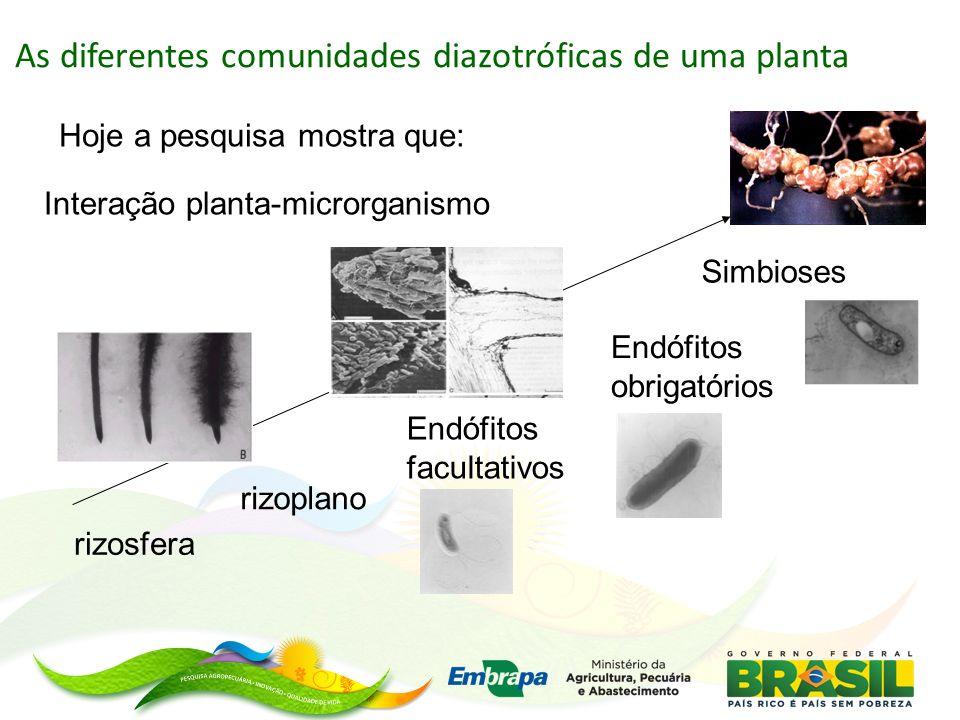 As diferentes comunidades diazotróficas de uma planta rizosfera rizoplano Endófitos facultativos Endófitos obrigatórios Simbioses Interação planta-microrganismo Hoje a pesquisa mostra que: